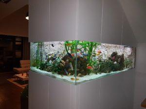 Akwarium optiwhite
