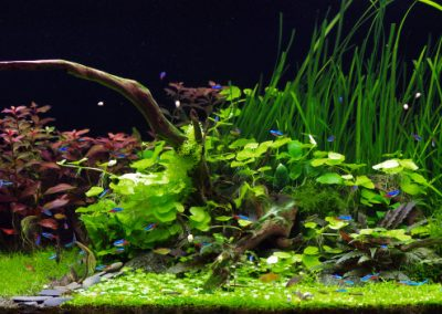 Akwarium roślinne 450 L