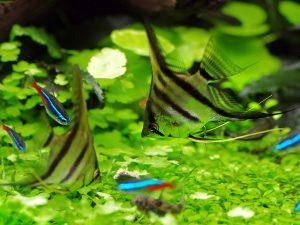 aranżacja akwarium - rybki