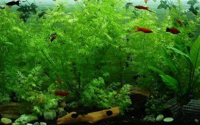Rośliny i tła w akwarium