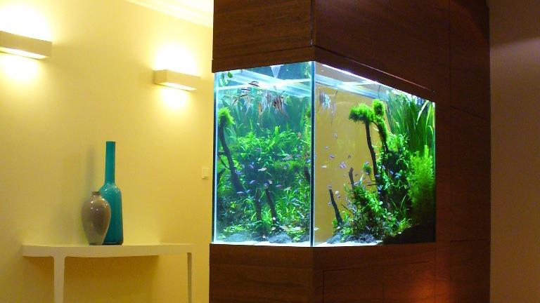 oferta - zakładanie akwariów na indywidualny wymiar