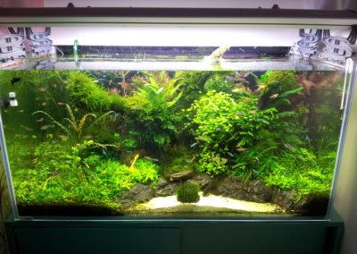 Akwarium roślinne 300 L