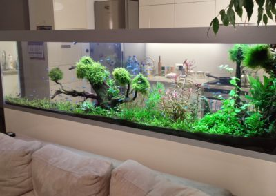Akwarium roślinne 500 L