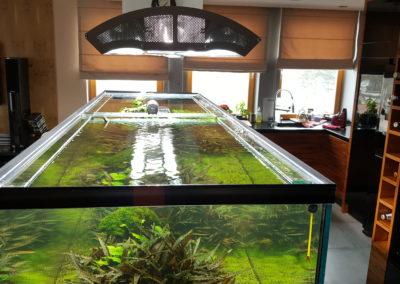 Akwarium roślinne 1250 L