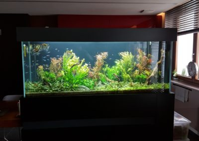 Akwarium roślinne 800 L