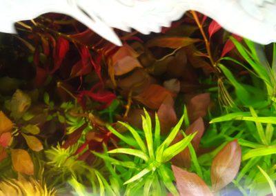 Akwarium roślinne 720 L