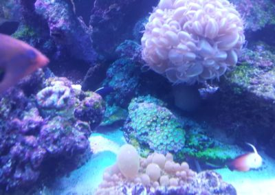 Akwarium rafowe 720 L