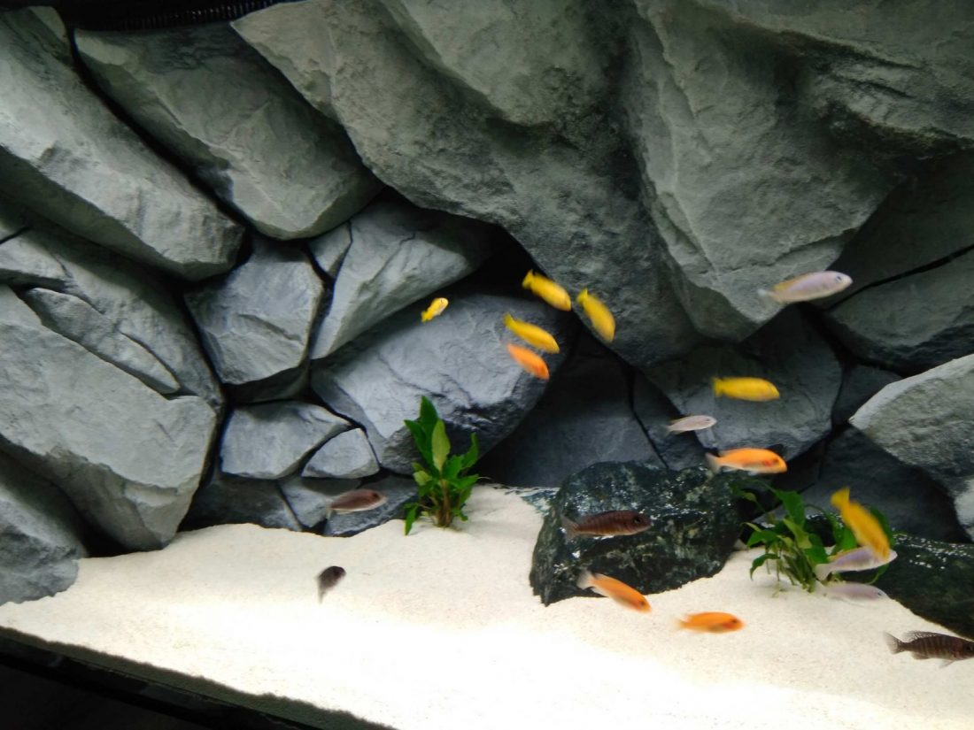 Zakładanie własnego akwarium