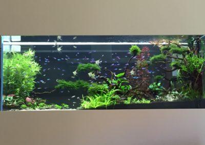 Akwarium ze skalarami 800 L