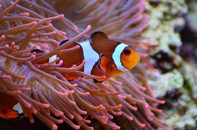 ryby w akwarium słodkowodnym