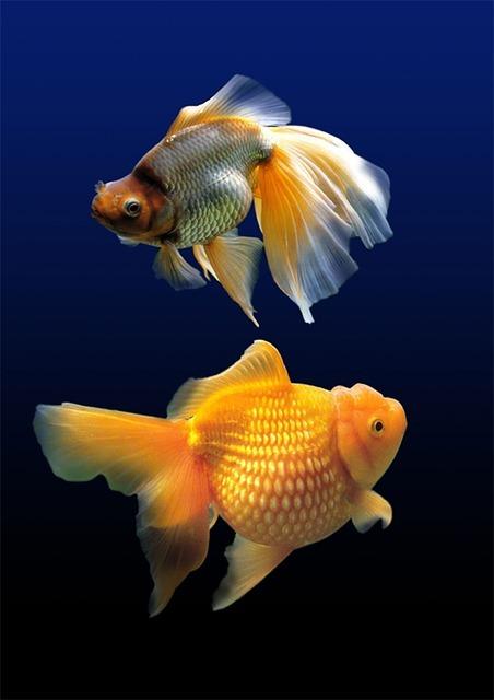 Akwarium na zamówienie - Ryby w akwarium