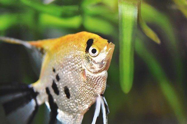 Aranżacja akwarium - Ryba