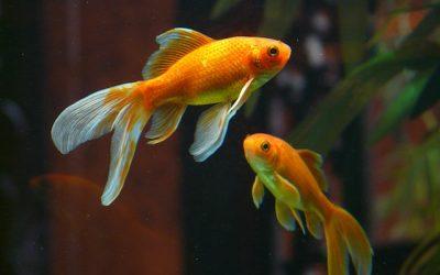 Aranżacja akwarium