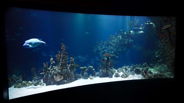Akwarium na indywidualny wymiar