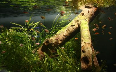 Dekoracje w akwarium