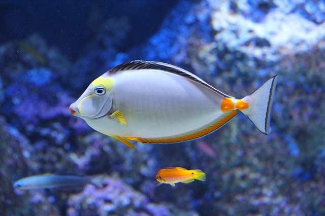 Ryba w Akwarium optiwhite