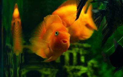 Jak skutecznie i profesjonalnie wyławiać ryby z akwarium?