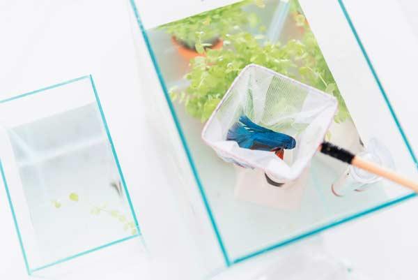 wyławianie ryb z akwarium